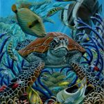 green_turtle_on_ribbon_reef_dailan_pugh_2008